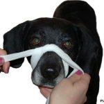 Hunden einen Verband anlegen – Erste Hilfe