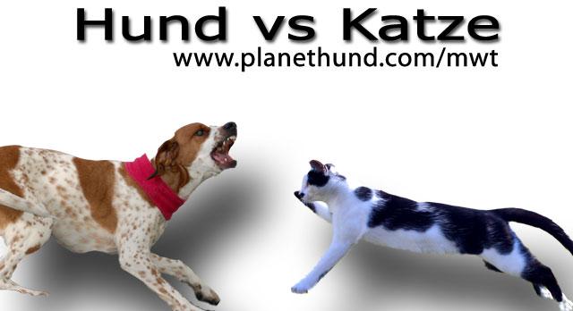 hund vs katze allgemein planet hund. Black Bedroom Furniture Sets. Home Design Ideas