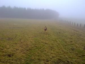 Hund auf Wiese im Nebel