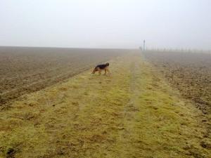 Stöbersuche Hund