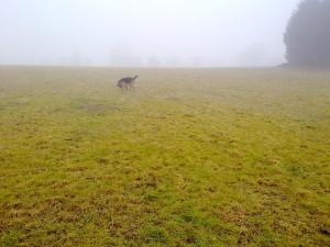 Hund bei der Nasenarbeit