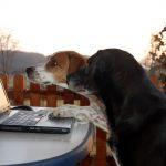 Online Hundetraining: Sinnvoll?