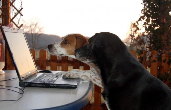 Hunde vor Laptop, Foto: Melanie