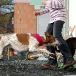 Verteidigung im Notfall: Wenn der eigene Hund angegriffen wird