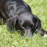Hund Strafe, Foto: Melanie