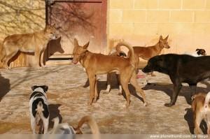 Hunde Tierschutzorganisation