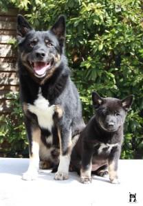Kleiner Welpe mit Hunde Vater