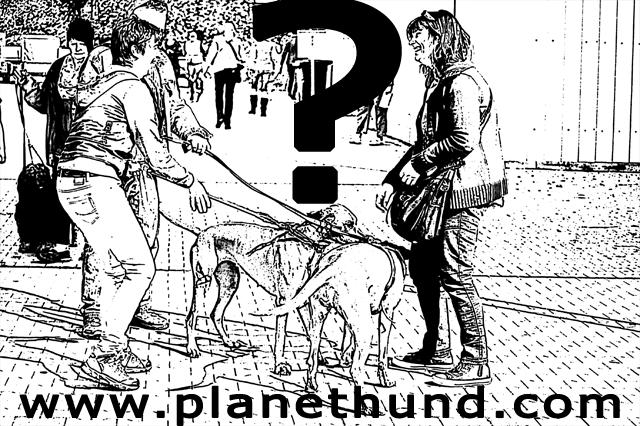 hundehalter-mensch