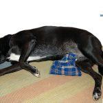 hund-erste-hilfe-seitenlagerung-waermekissen
