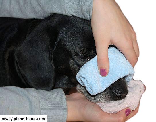 Hund Nasenbluten