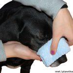 Hund Nasenbliten