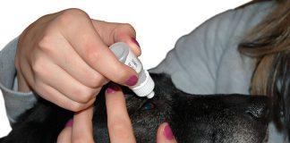 hund-erste-hilfe-augentropfen