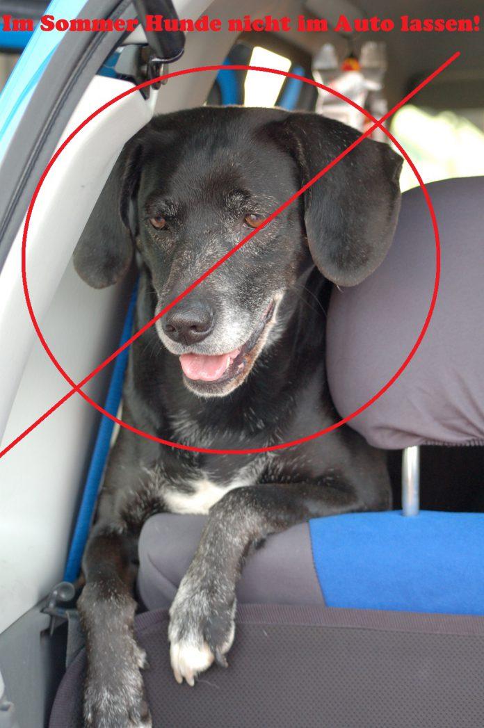 Hund im Auto, Foto: Melanie