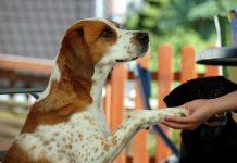 Tierschützer - Menschenhasse, Foto: Melanie