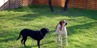 Hunde Freilauffläche, Foto: Melanie