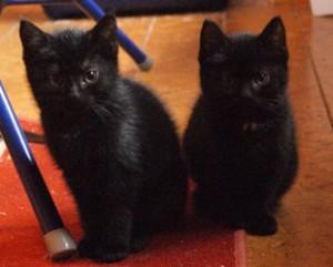 Zwei schwarze Katzen