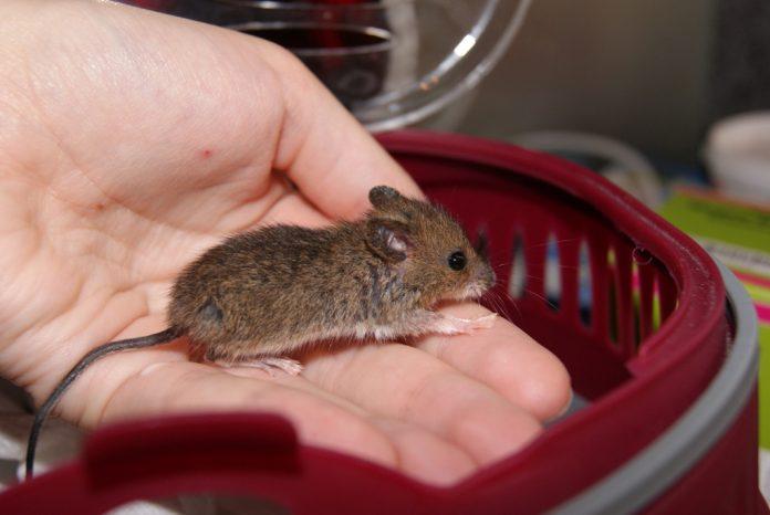 Tierschützer - Menschenhasse, Foto: Nina