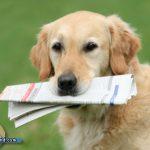 Krimiautor setzt Rolle in Buch als Finderlohn für Hund aus