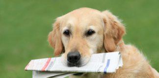 Planet Hund Neuigkeiten