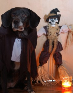 Hunde Halloween Kostüm