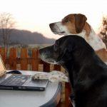 Beispielbild für Hunde im Büro, Foto: Melanie