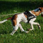 Hitch der Rettungshund hat den Weltrekord geschafft