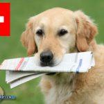 Schweiz will Haustierhandel verbieten