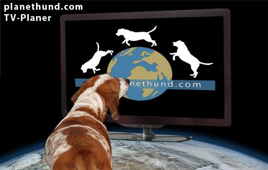 Tiersendung TV Fernsehen Hund