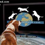Universum: Jagdkumpane – Wie der Hund auf den Menschen kam