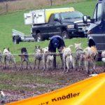 Anhänger mit 15 Schlittenhunden auf A16 bei Biel umgekippt