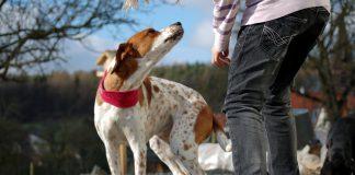 annaeherung fremder hund, Foto: Melanie