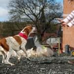 Kontaktaufnahme mit fremden Hunden