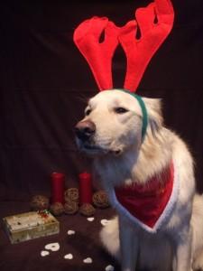 Hund mit Plüschohren