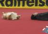 Dogdance