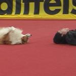 Dogdance Video – Timi Páll mit Figaro