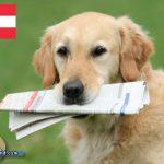 Hund Leon unverletzt von Bergrettung geborgen