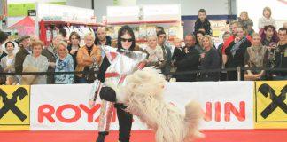 Mensch & Tier 2012