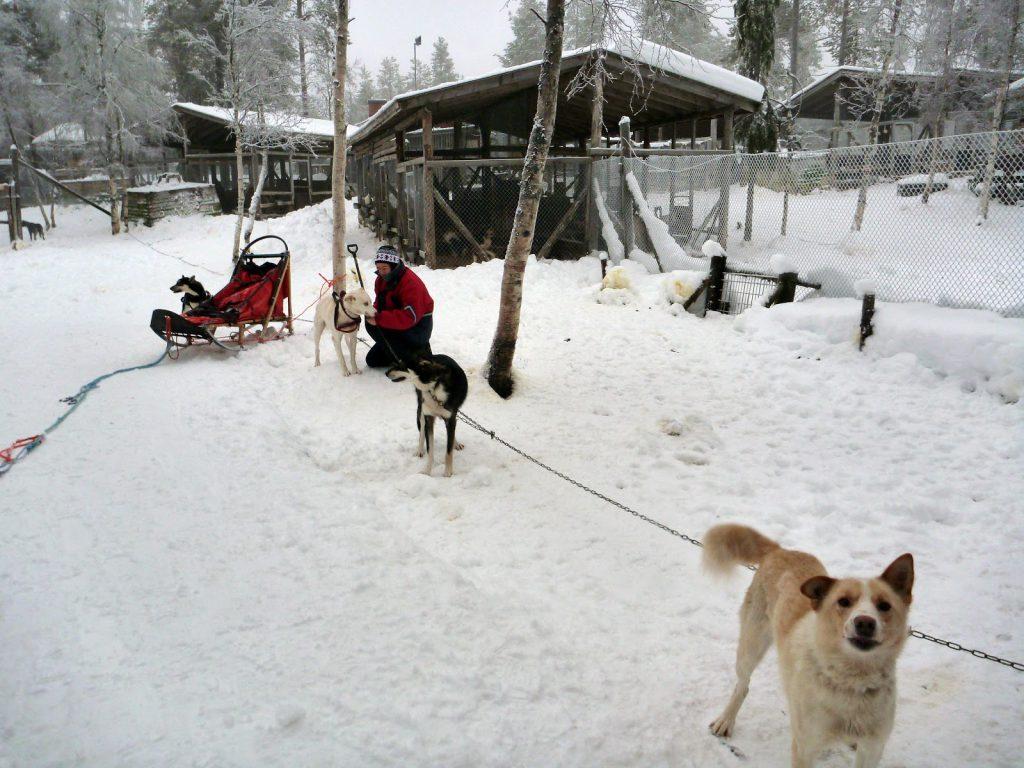 Husky Hundeschlitten