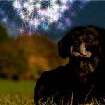 Hund ängstlich zu Silvester: Was tun?