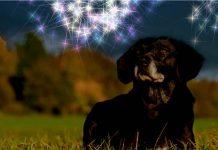 Silvester Hund Tipps
