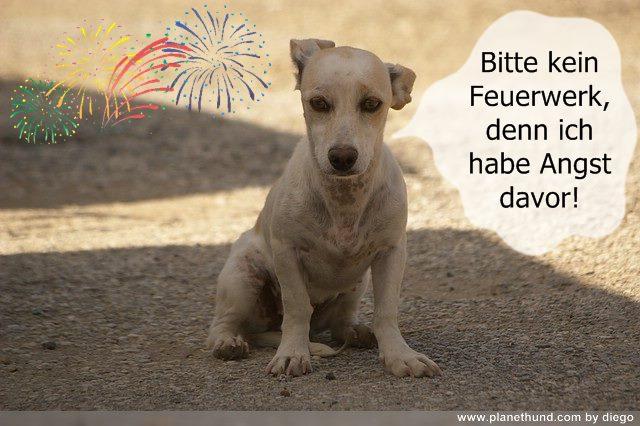 Silvesterfeuerwerk Hund