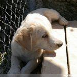 Welpen an eine Hundebox gewöhnen