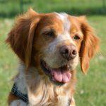 Lerntheorien für Hundehalter: Klassisches Konditionieren (Teil1)