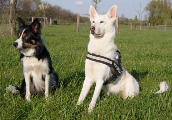 Hunde machen Sitz