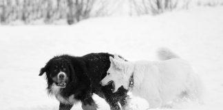 Winterhunde, Foto: Steirerwerk