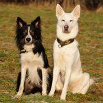 Imitationslernen und die soziale Lerntheorie: Lerntheorien für Hundehalter (Teil 3)