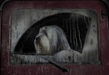 Burt Hundebildband The Silence of Dogs in Cars