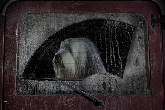 Burt, Hundebildband The Silence of Dogs in Cars