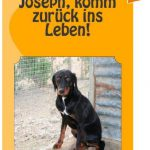 Eike Martin schreibt eine Tierschutzgeschichte über den Hund Joseph
