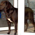 BGH Urteil: Kein generelles Verbot von Hundehaltung durch Vermieter